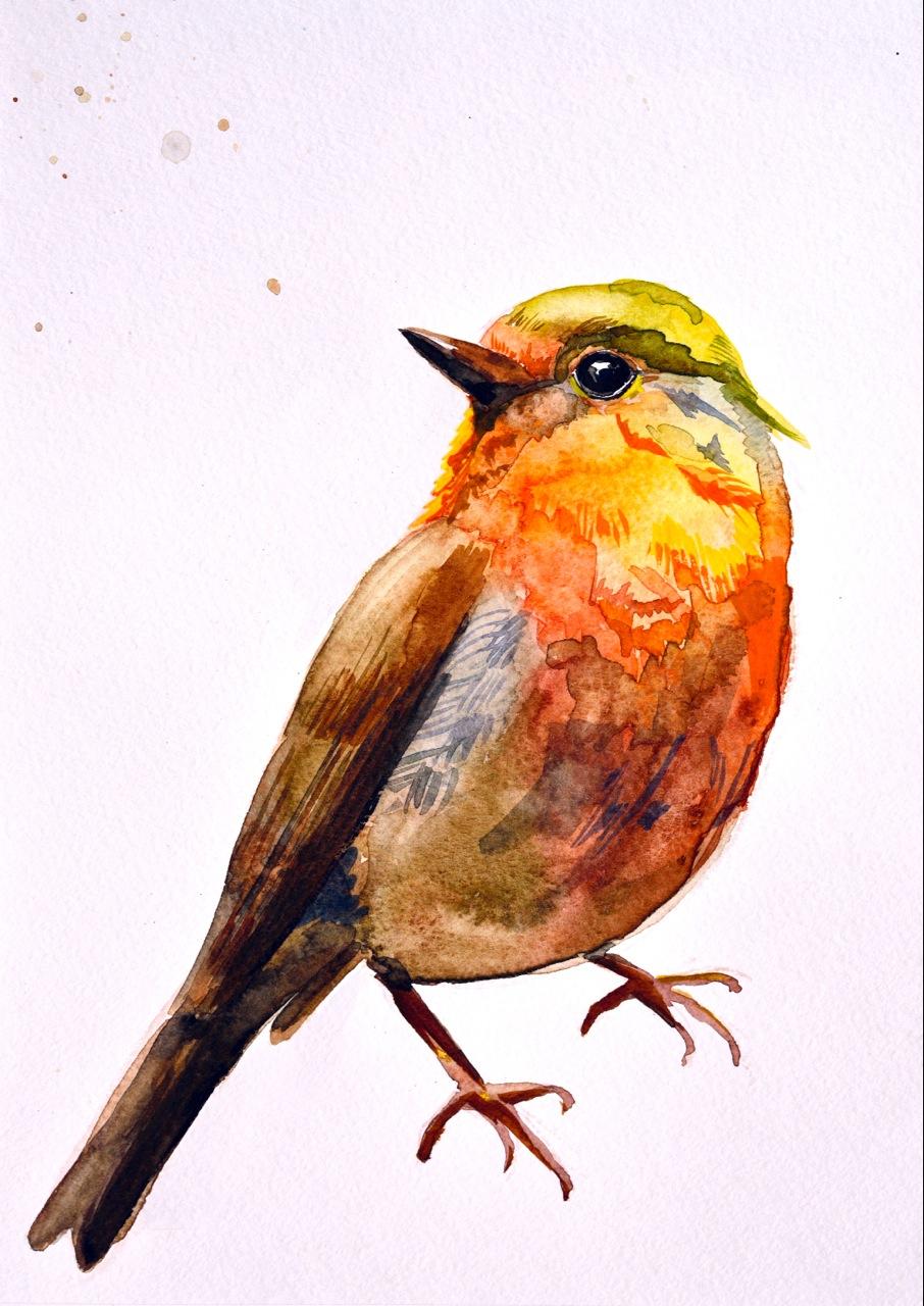 a sweet little bird